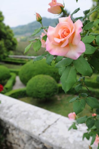 fiori 13