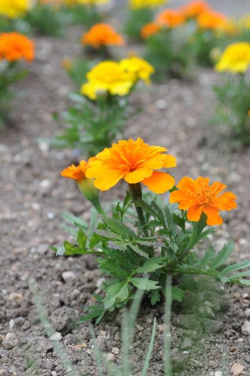 fiori 9