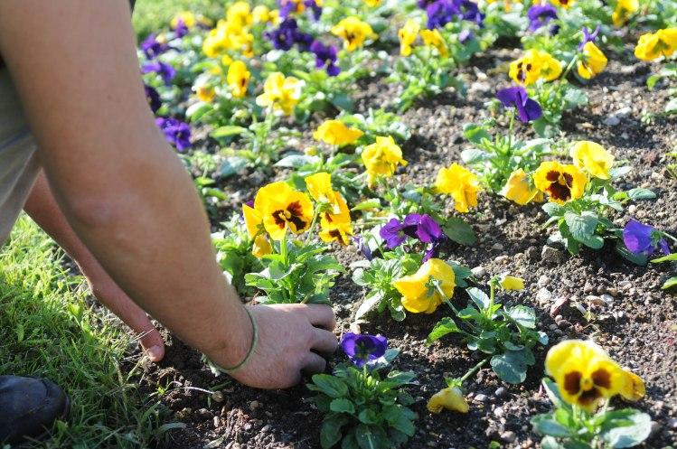 piantumazione fiori 1